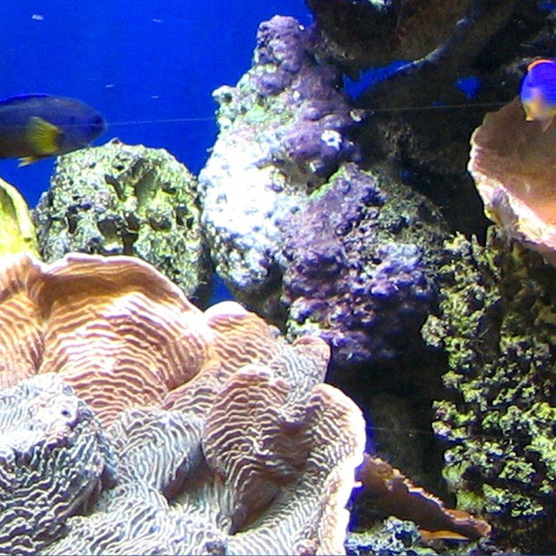 Invertebrados, corales y macroalgas