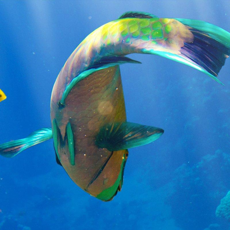 Tropical center la instalaci n de peces m s moderna de for Peces marinos para acuarios pequenos